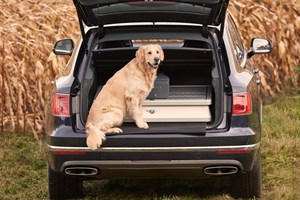 Field sports, gun, shooting, Bentayga, car, dog Field sports, gun, shooting, Bentayga, car, dog